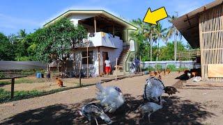 ANIMALS FARM│Farm house Construction expenses & Building Farm ENCLOSURE