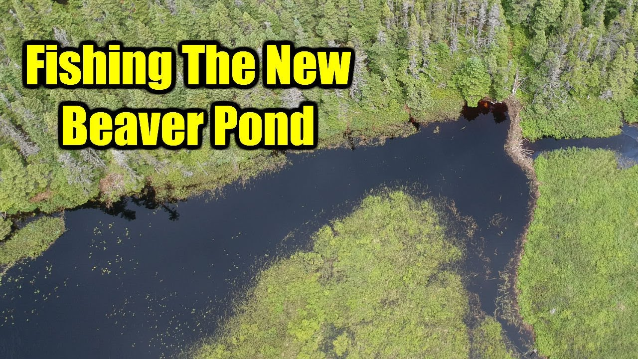 Fishing The New Beaver Pond