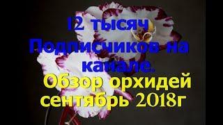 Обзор орхидей сентябрь 2018г. Спасибо мои хорошие подписчики!!!
