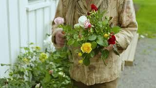 Klipper Rose