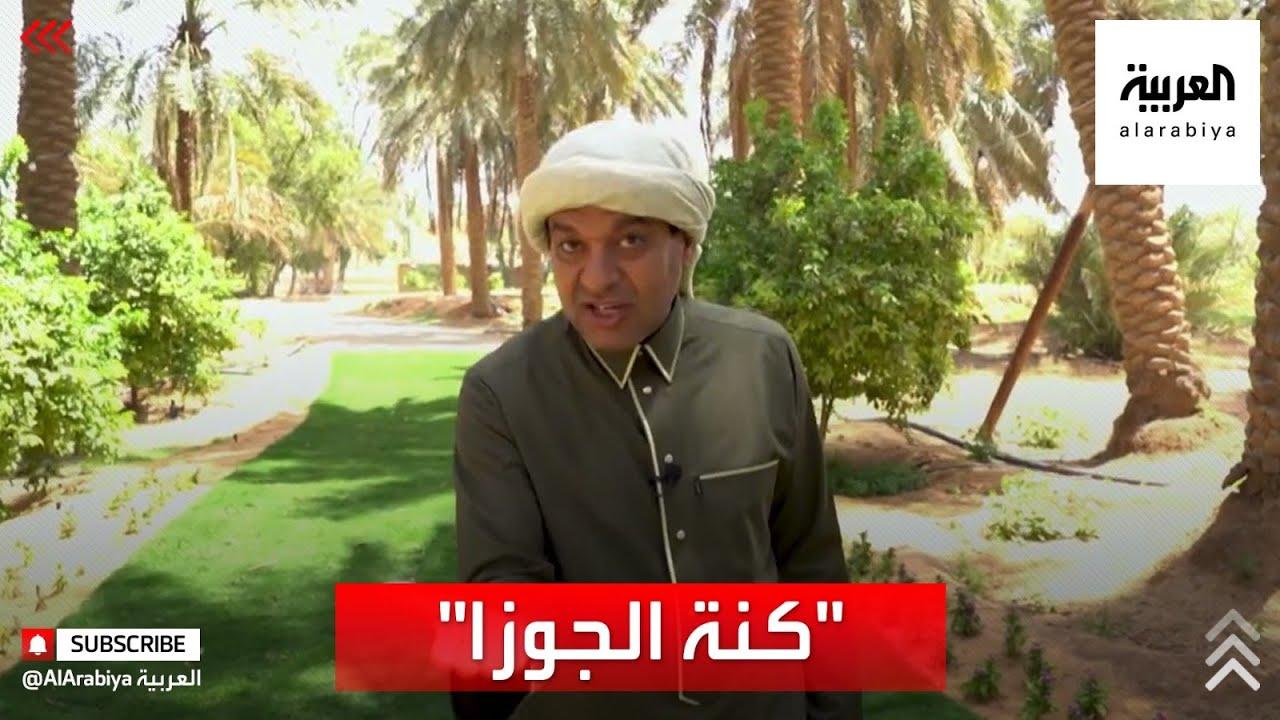 نحن في موسم القيظ وقد أطلق عليه العرب -كنة الجوزا- فما سبب تسمية بهذا الأسم؟  - نشر قبل 2 ساعة