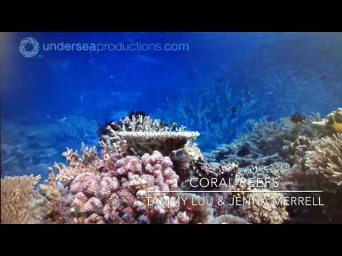 Coral Reefs Documentary
