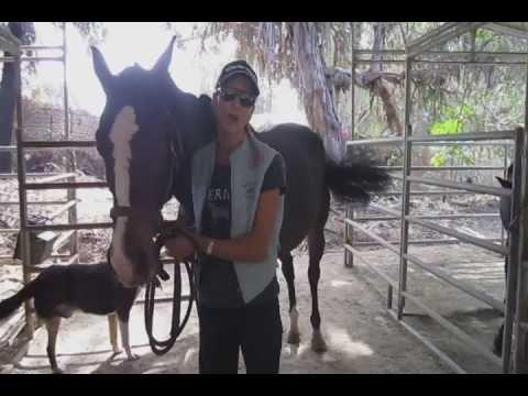 San Diego horseback riding lessons at Mega Arte Riding Academy