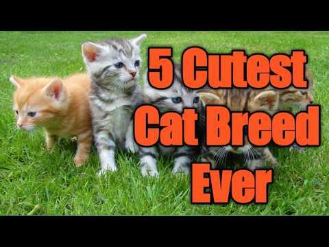 BEST 5 CUTEST CAT YOU DON''T WANNA MISS.......