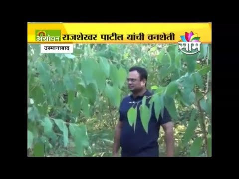 Bamboo farming...success story of Mr.Rajshekhar  Patil is earning crores Rs. Every year