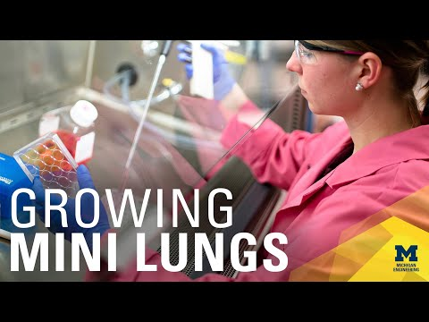 A Scaffold For Growing Lung Organoids   Michigan Engineering