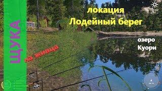 Русская рыбалка 4 озеро Куори Щука на живца под лагерем