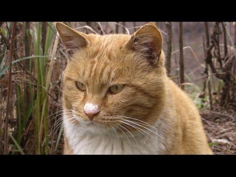 코에 크림 묻은 거대고양이