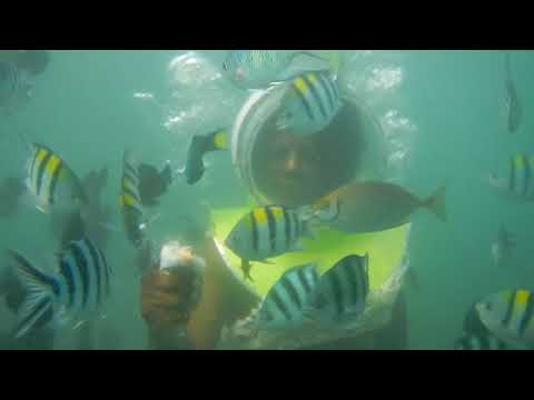 Underwater world on a semi-submersible submarine in Indonesia