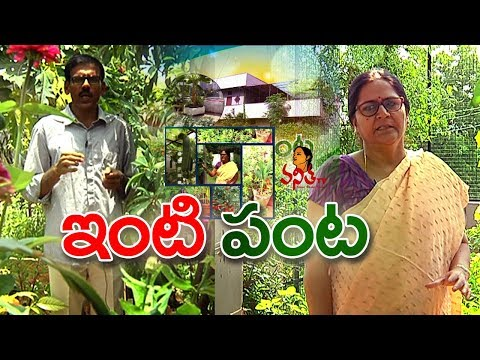 Rooftop Organic Farming || Different Types of Plants Growing || Inti Panta || Vanitha TV