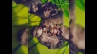 Спокойный ночи котята / 0+