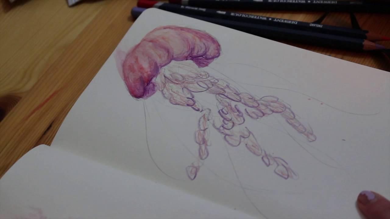 Jellyfish watercolor pencil illustration