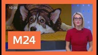 Пенсионерка со сворой собак держит в страхе жителей дома в подмосковных Химках