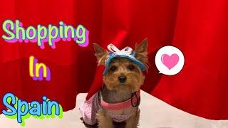 DOG VLOG: Отдых с собакой в Испании // Шоппинг на Канарах с собакой // Зоомагазин на Канарах