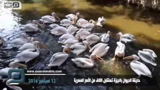 مصر العربية | حديقة الحيوان بالجيزة تستقبل الآلاف من الأسر المصرية