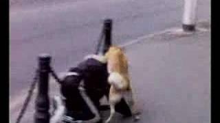 Санкт-Петербург - собака