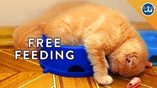 You're Feeding Your Cat All Wrong!