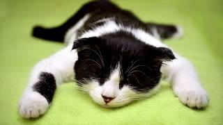МАЛЮНЧИК ТВ || Видео для детей 2019 || Красивые котики