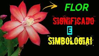 FLOR SIGNIFICADO E SIMBOLOGIA!