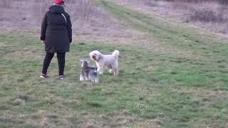 Puppy Dog Hotel Holiday Harvey, Leyla, Reg, Daisy and Roxy