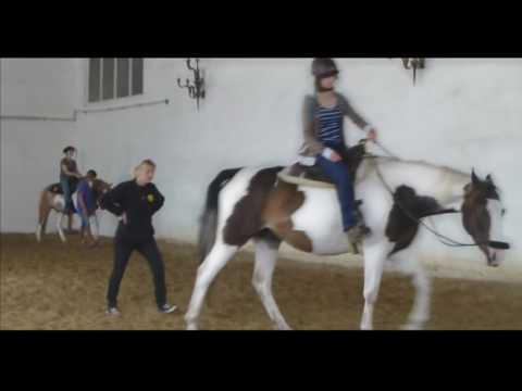 Bild: Pferde und Reiterausbildung - RAI Reiten am BAZ in Dasing