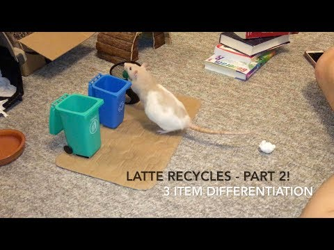 Latte Learns Recycling - Part 2! We Finally Did It!