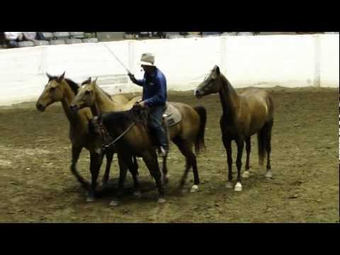 Guy McLean at Equine Affaire (Ohio) on Flying Lead Change