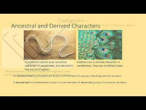 Chapter 18.5 - Classical Taxonomy and Cladistics