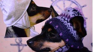Шьем простую шапку для собаки