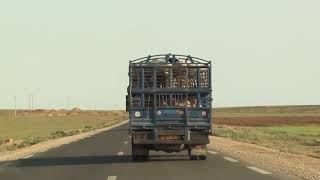 Transport de moutons par les camions