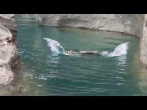 Hatta Pools Jump
