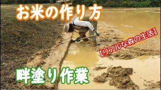 「畔塗り作業」重労働!昔ながらの手作業で【リアルな森の生活】【ForestLife】Make organically grown rice in INAHO-FARM「OKINAWA」