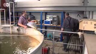 Buceo industrial: soldar bajo el agua | Hecho en Alemania