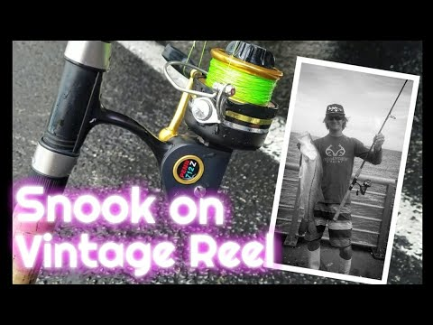 Catching Snook On Vintage Penn Fishing Reel