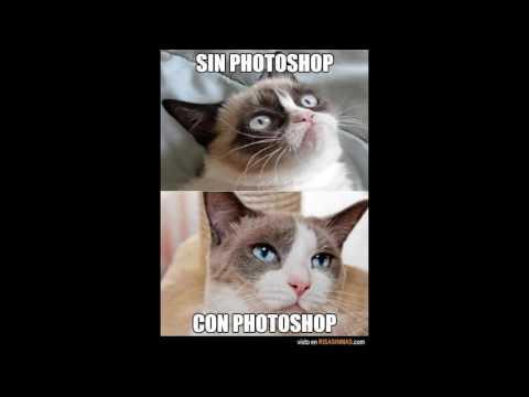 imagenes de gatitos graciosos con frases, espero que les guste :3