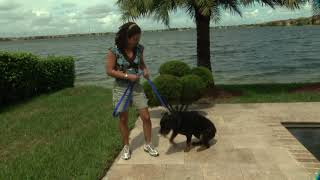 How dogs learn and the SIT/STAY commands