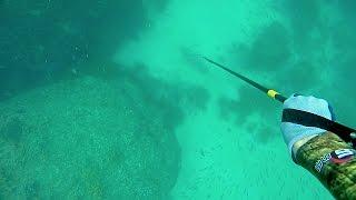 2015年9月5日。九州某所。岸際の浅い砂地で寝そべるクエを発見。80cm〜9...