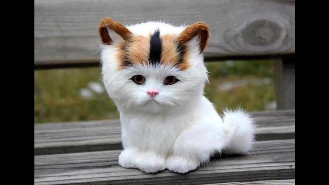 Adorable Cats pilation Most Beautiful Cats In The World 3