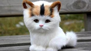 Adorable Cats Compilation - Most Beautiful Cats In The World #3