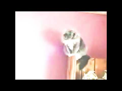 I put wii music over a guy yelling at cats