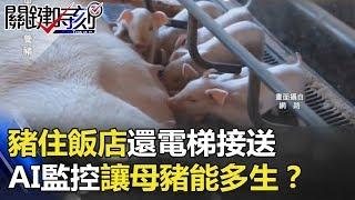 豬住飯店還電梯接送 高密度養殖AI監控讓母豬能多生三隻小豬!? 關鍵時刻 20180516-2 黃世  聰 朱學恒