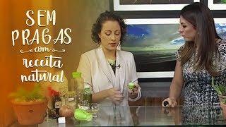 5 receitas caseiras contra pragas nas plantas