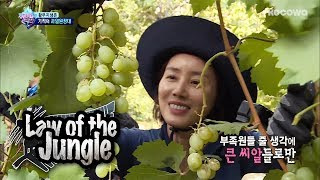 They Finally Get to Have Grapes in Chile!! [Law of the Jungle Ep 309]