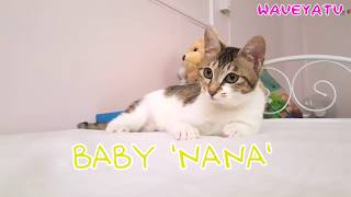 figcaption Cat wiggle wiggle 아기고양이 사냥놀이
