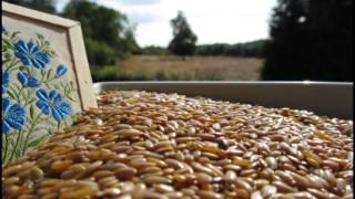 This is The Linseed Farm - Home of English Linseed / Flaxseed