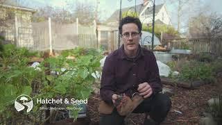 Why Wood Chips Belong in Your Garden