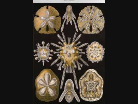 Ernst August Haeckel Art Forms In Nature