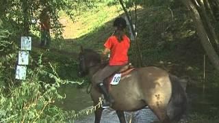 A Kerba.hu bemutatja: A Hucul ló