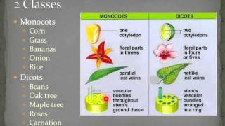 04  Taxonomy & Plants Flowering Plants