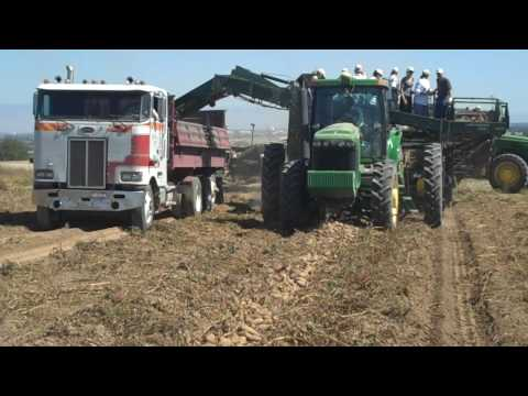 2009 Potato Harvest (video 1)